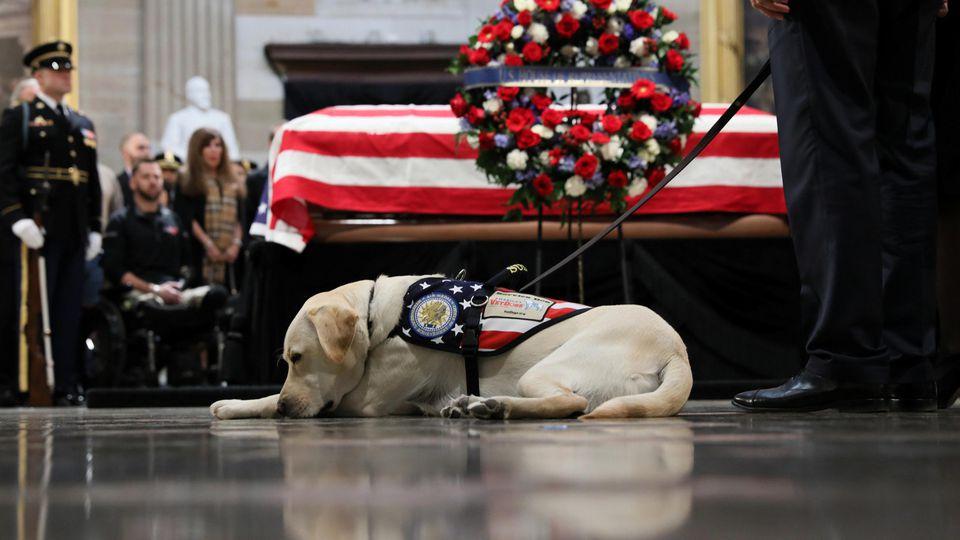 Assistenzhund Sully half dem verstorbenen Ex-Präsidenten George H. W. Bush im Alltag